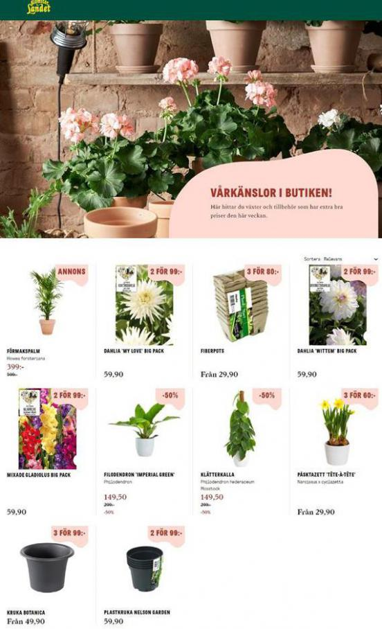 Blomsterlandet Erbjudande Aktuell Kampanj . Blomsterlandet (2020-03-31-2020-03-31)