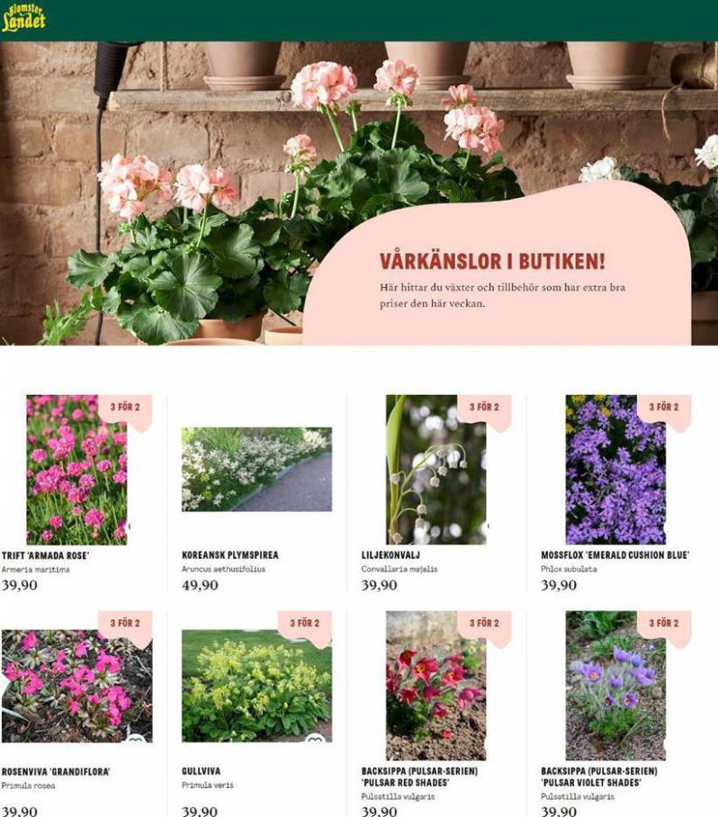 Blomsterlandet Erbjudande Aktuell Kampanj . Blomsterlandet (2020-04-30-2020-04-30)