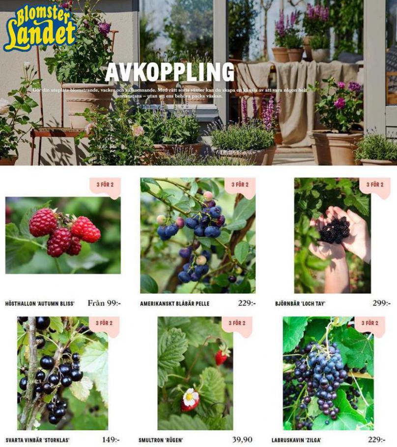 Blomsterlandet Erbjudande Avkoppling . Blomsterlandet (2020-08-31-2020-08-31)