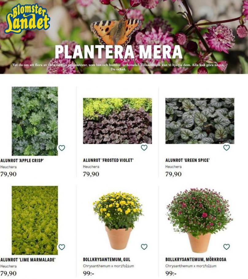 Blomsterlandet Erbjudande Höstplantering . Blomsterlandet (2020-10-31-2020-10-31)