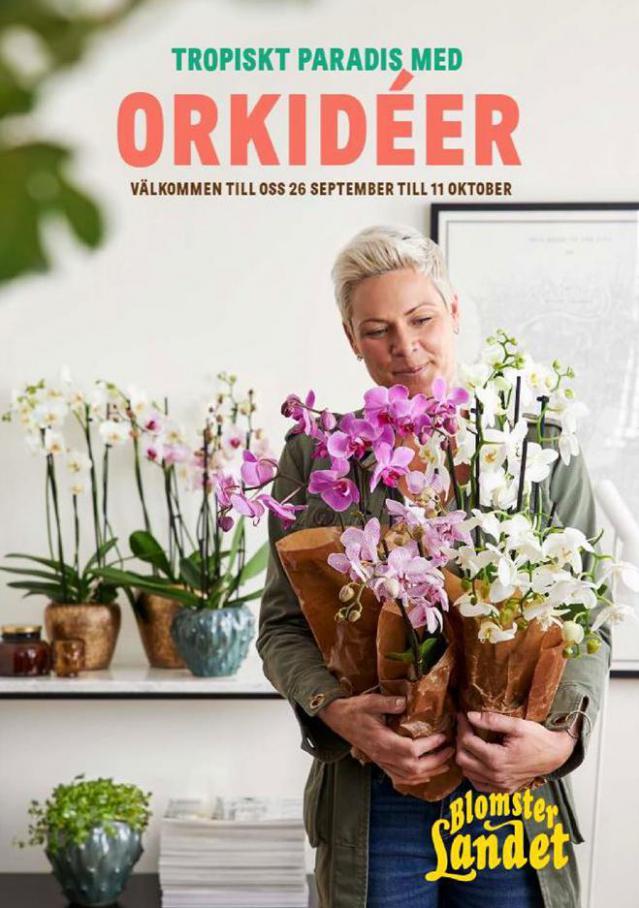 Blomsterlandet Erbjudande Orkidéer . Blomsterlandet (2020-10-11-2020-10-11)