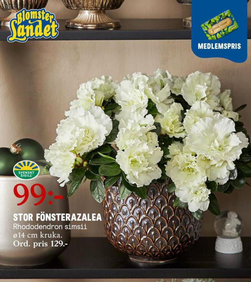 Blomsterlandet Erbjudande Aktuell Kampanj . Blomsterlandet (2021-01-31-2021-01-31)