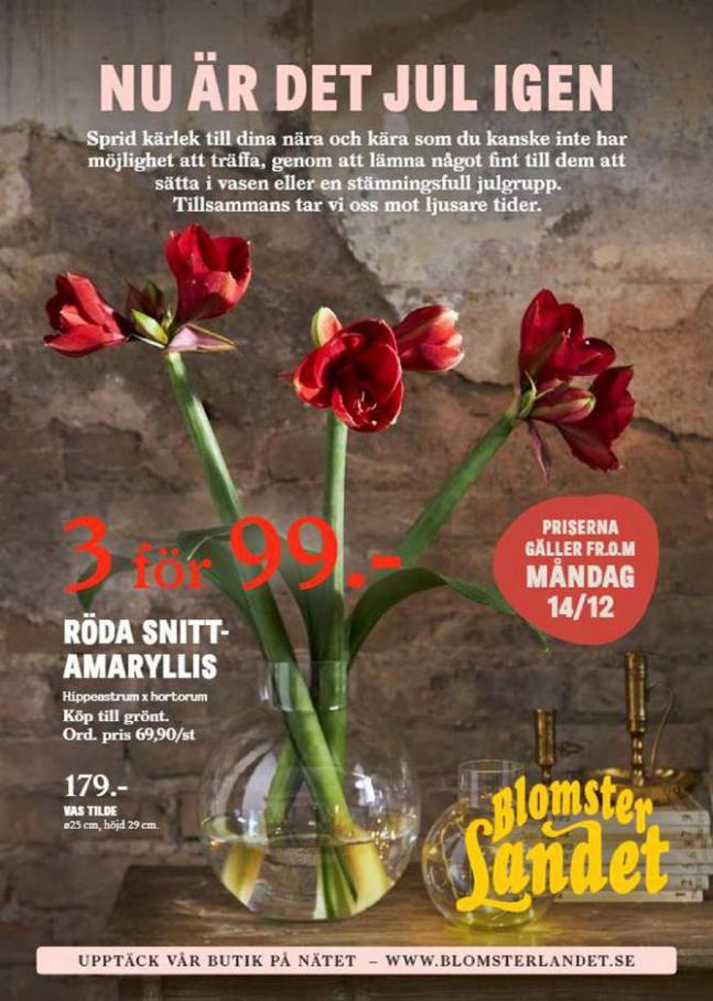 Blomsterlandet Erbjudande Nu är det Jul Igen . Blomsterlandet (2020-12-27-2020-12-27)
