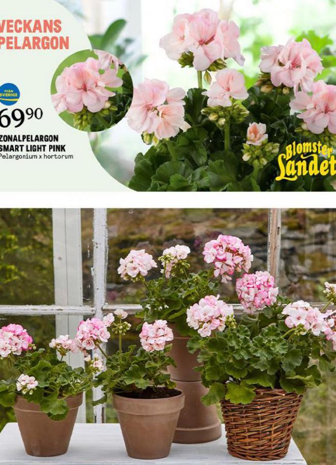 New offers . Blomsterlandet (2021-05-02-2021-05-02)