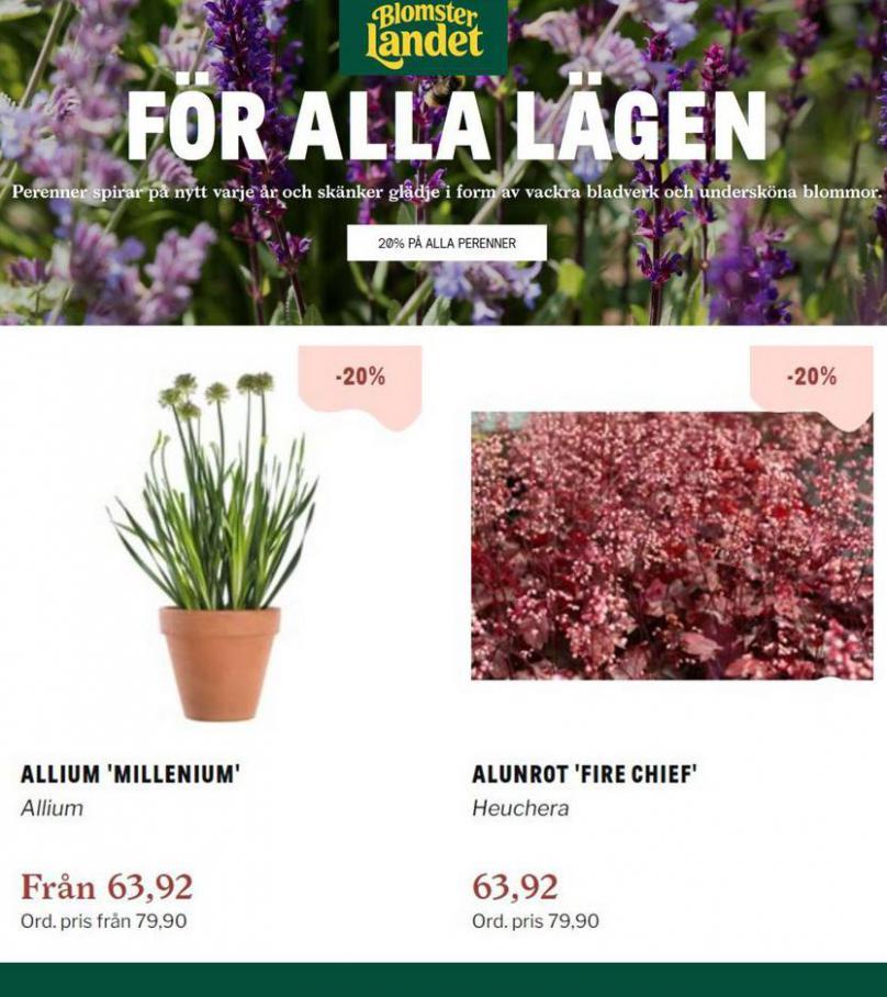 Perenner för alla lägen -20%. Blomsterlandet (2021-07-20-2021-07-20)